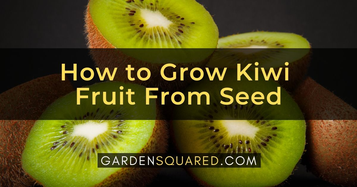 How To Grow Kiwi Fruit From Seed