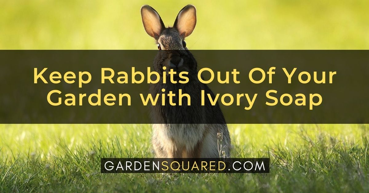 How To Keep Rabbits Out Of Your Garden With Ivory Soap