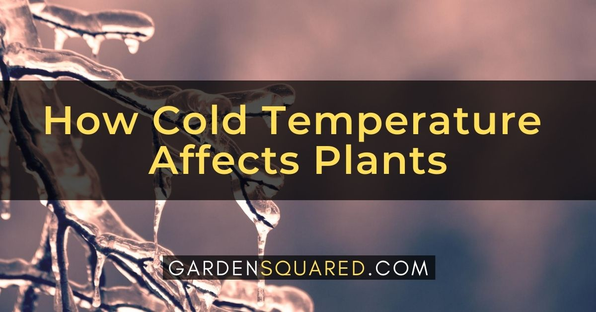 How Does Cold Temperature Affect Plants