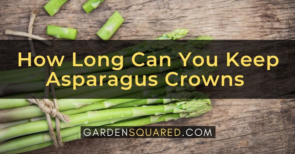 How Long Can You Keep Asparagus Crowns Before Planting