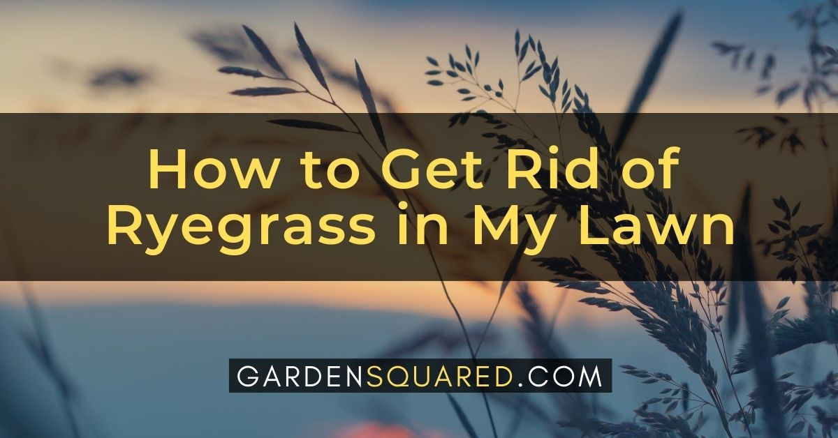 How To Get Rid Of Ryegrass In My Lawn