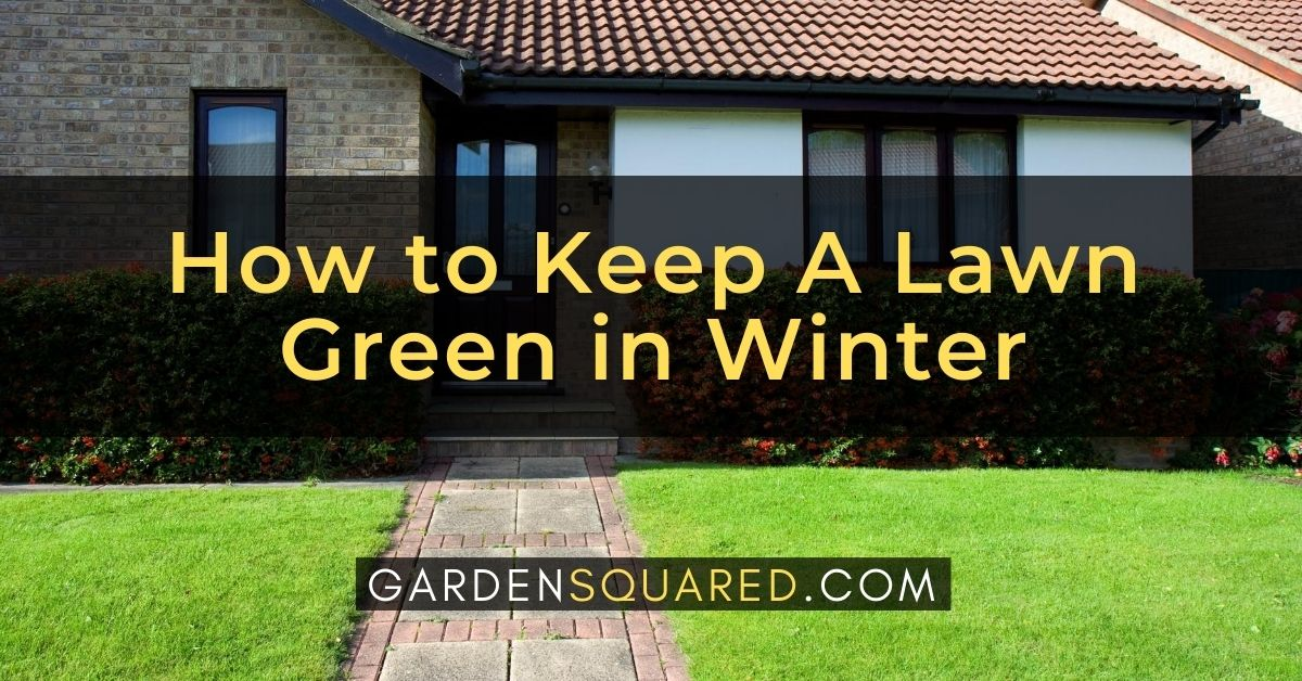 How To Keep A Lawn Green In Winter