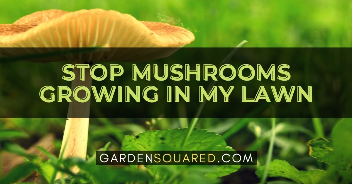 How Can I Stop Mushrooms Growing In My Lawn