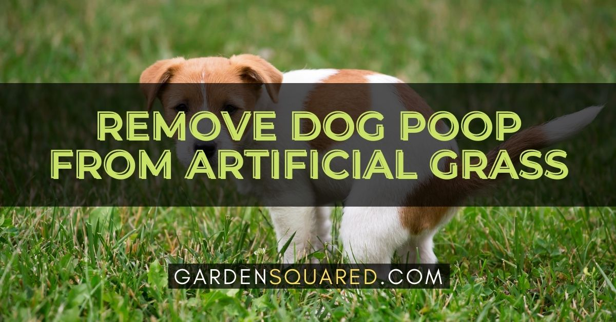 How To Remove Dog Poop From Artificial Grass