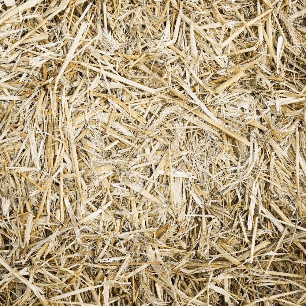 Using Hay Or Straw To Mulch The Grass Seeds