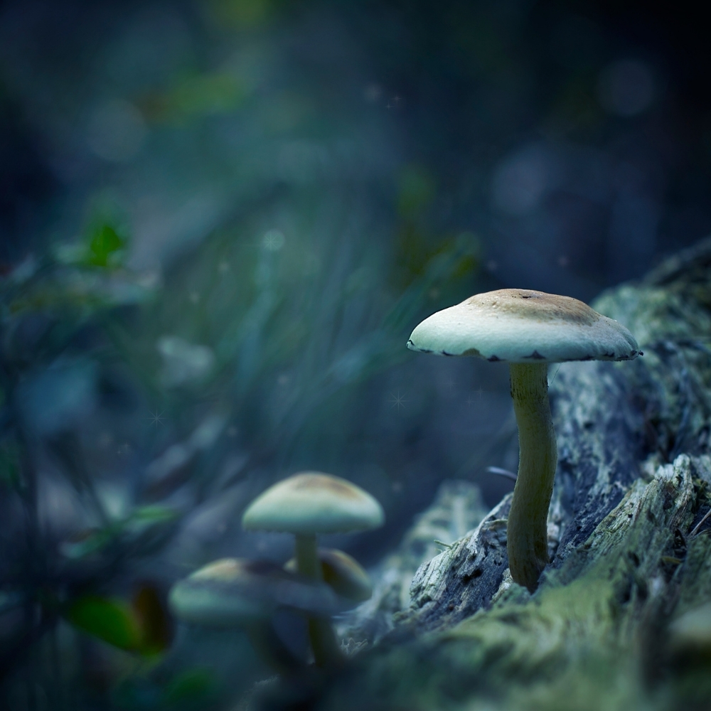 mushroom types thrive well in areas with low light supply.
