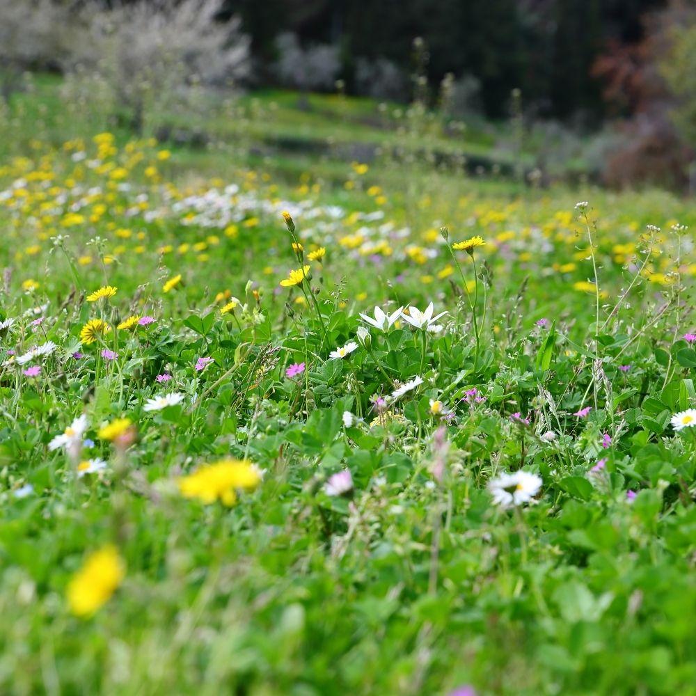 Lawn to Prairie