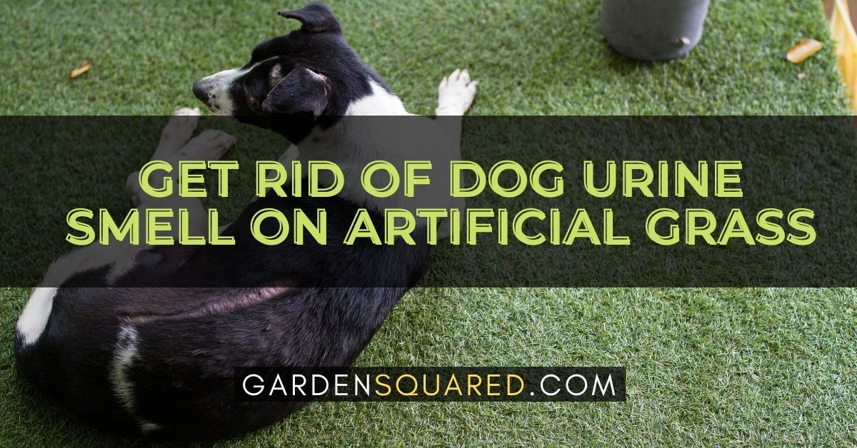 How To Get Rid Of Dog Urine Smell On Artificial Grass