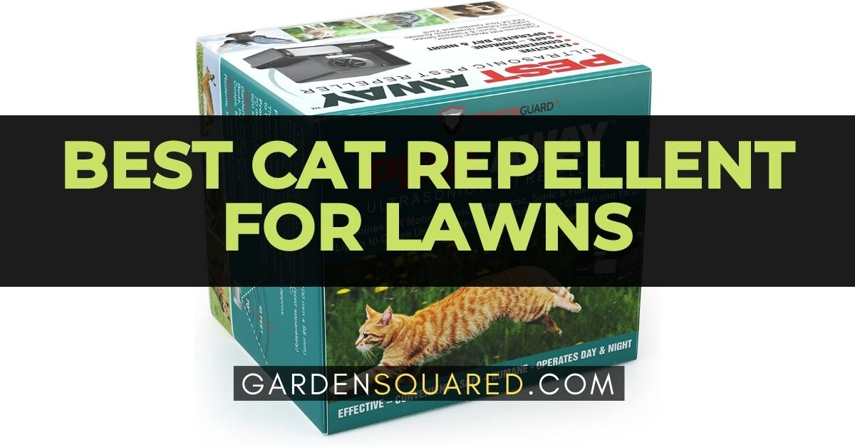 The Best Cat Repellent For Lawns