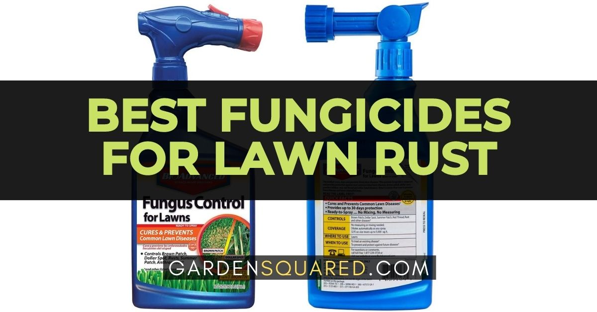 The Best Fungicides For Lawn Rust