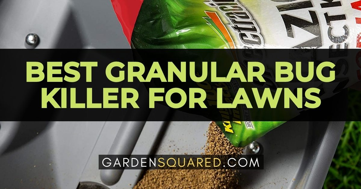 The Best Granular Bug Killers For Lawn