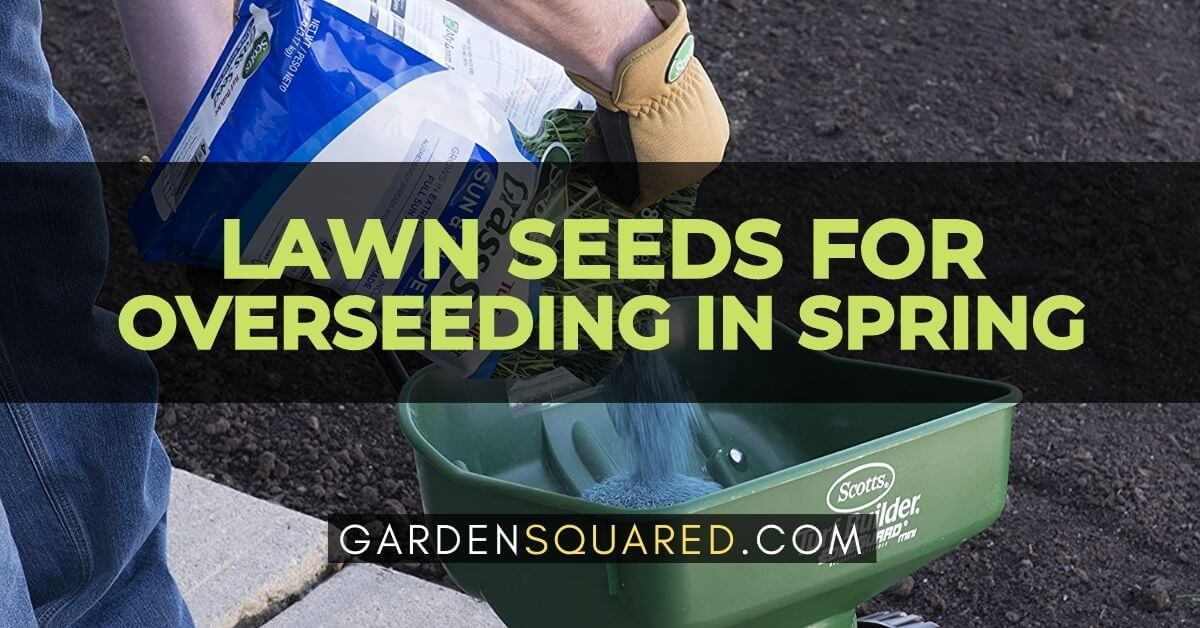 Best Lawn Seeds For Overseeding In Spring