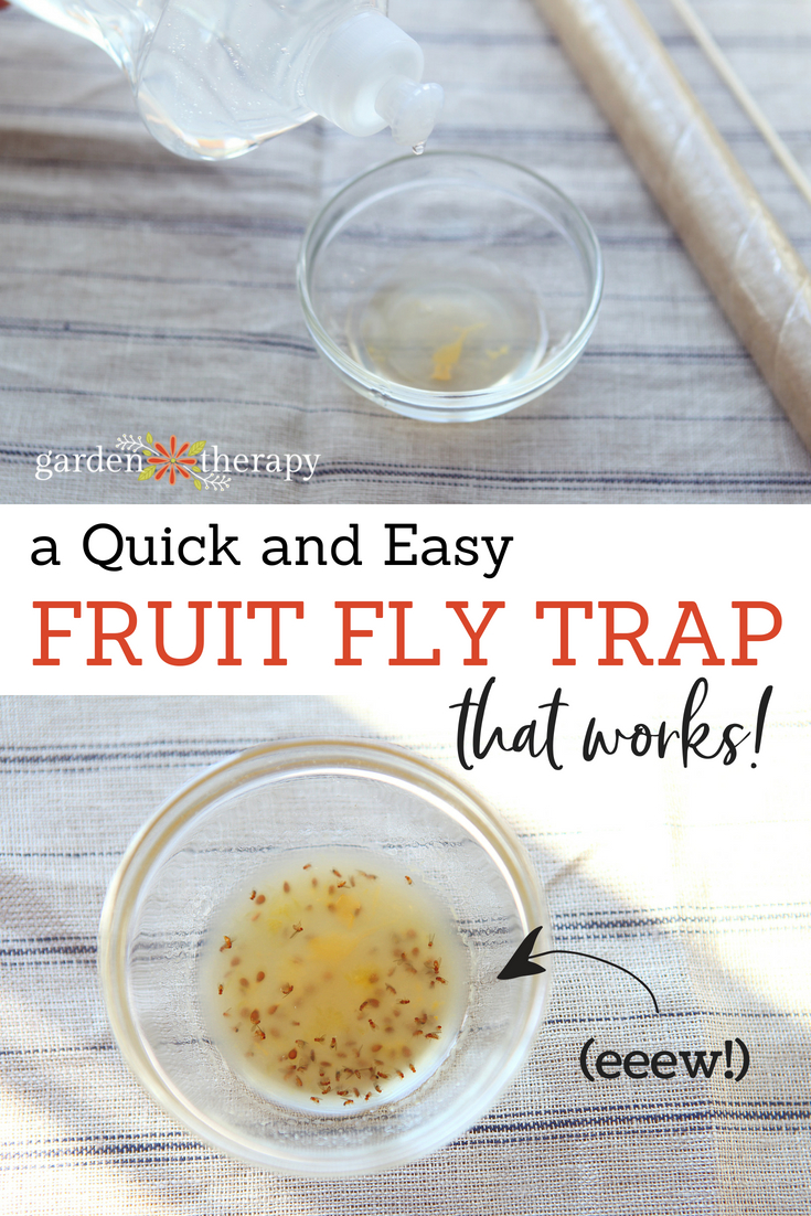 How To Make A Quick And Easy Fruit Fly Trap