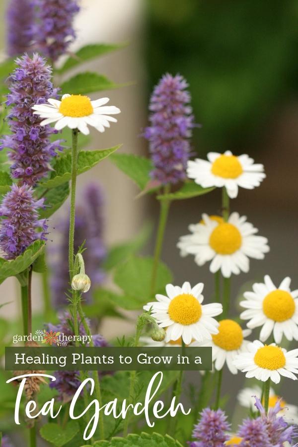 Grow A Healing Herbal Tea Garden Garden Therapy