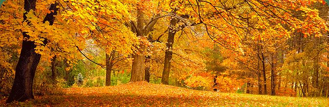 Spectacular autumn foliage