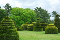 Topiary garden at Longwood
