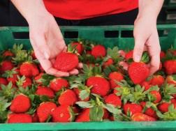 Queensland strawberries
