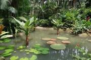 Singapore Botanic Gardens Photo Rojypala