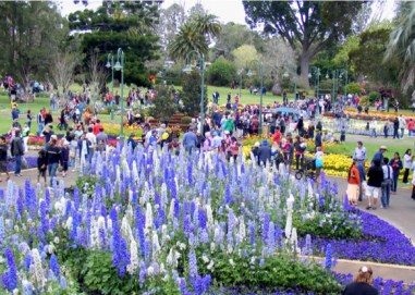Spectacular displays at the Toowoomba Carnival of Flowers