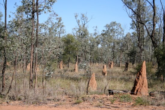 Termite mounds outback Qld