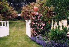 Barewood Garden by Carolyn Ferraby