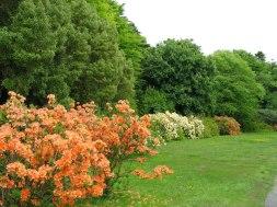 Achamore Garden, Gigha. Photo Johnny Durnan-geograph.org.uk