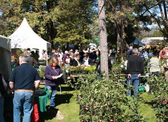 Busy stalls at Lanyon plant fair