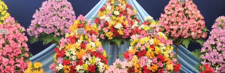 rhs_flower_show_birmingham