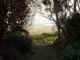 Twilight at Kamahi Cottage