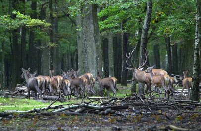 Foret Rambouillet
