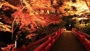 Hotel Chinzanso Tokyo evening walk through the autumn foliage