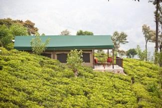 Mandulkelle Tea and Eco Lodge lodge