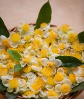 Mandulkelle Tea and Eco Lodge tea flowers