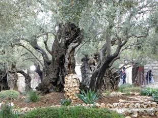 Israel, Jerusalem - Garden of Gethsemane