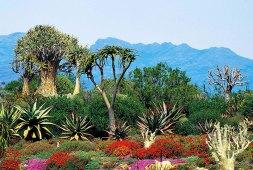 Karoo Desert National Botanical Garden © South African Tourism
