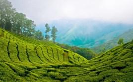 Sri Lanka, Kerala, Munnar tea garden