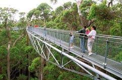 Valley of the Giants Treetop Walk, Walpole-Nornalup National Park, Western Australia