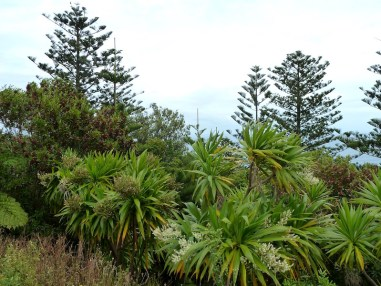 Norfolk Island Botanical Garden