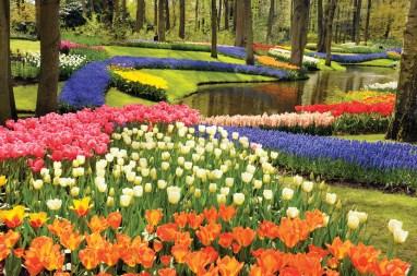 Spring bulbs in Keukenhof Gardens