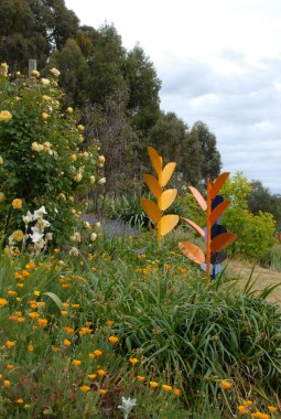 Casuarina garden at Mylor. Photo Helen Mckerral
