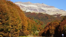 Chile - mountain forests in autumn/fall