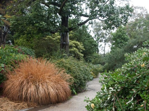 Ellis Stones Garden at Burnley Gardens. Photo Anne Vale