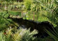 Greenwall in Hamilton Gardens, North Island New Zealand