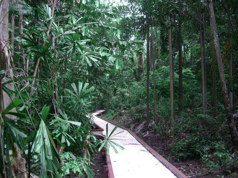Rainforest gully in the George Brown Darwin Botanic Gardens. Photo Kathryn Greenhill
