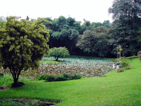 Sri Lanka, Kandy - Botanical Gardens in Peradeniya