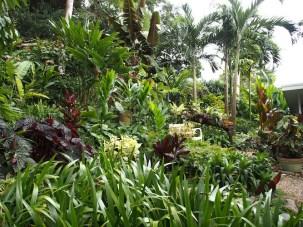 Tabu - tropical garden in Far North Queensland