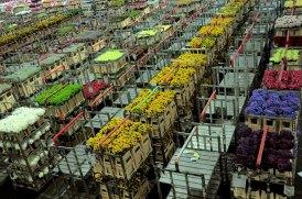 Aalsmeer Flower auction. Photo faungg's Photos via Flickr