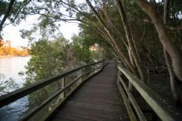 Mangrove boardwalk along the Brisbane River