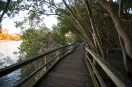 Mangrove boardwalk along the Brisbane River