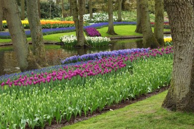 Tulips and bulbs at Keukenhof, The Netherlands
